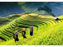 Sapa trekking tour: Discover Ta Van and Ho Villages in Sa Pa